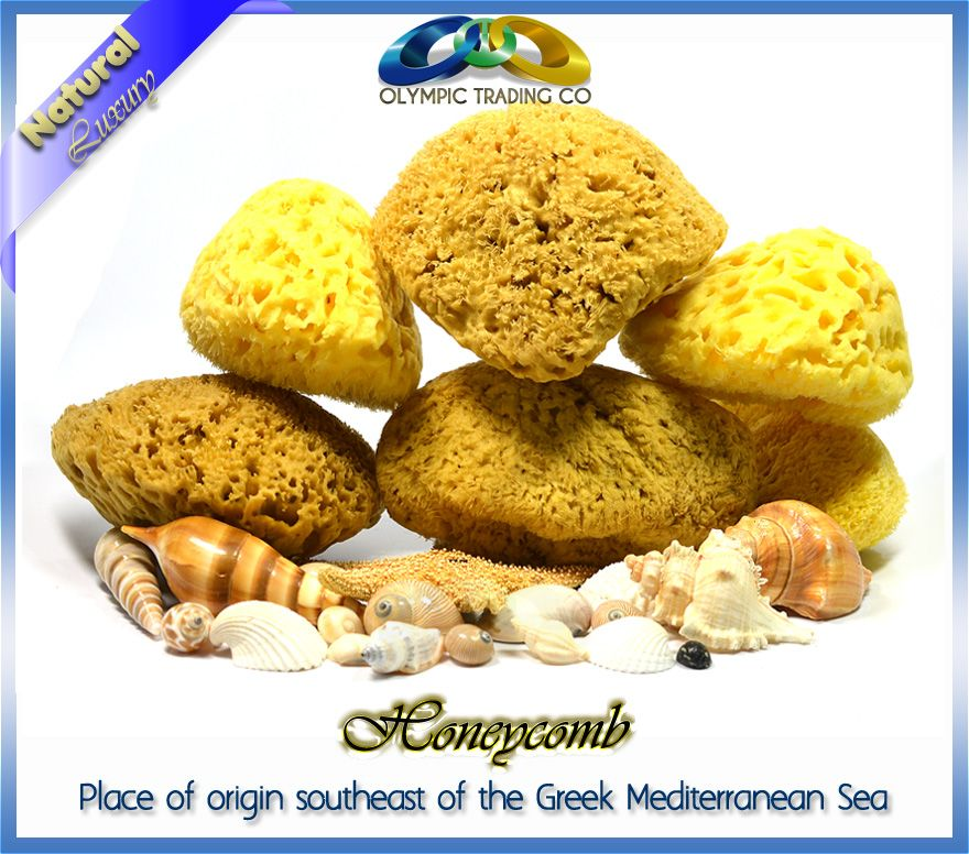Wholesale Natural Sea Sponge Honeycomb