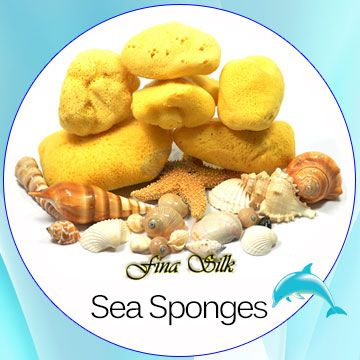 sea_sponges_square